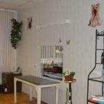 зоопарикмахерская в Обнинске