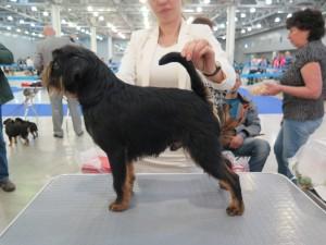 подстричь собаку Обнинск
