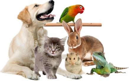 картинка со здоровыми и радостными животными