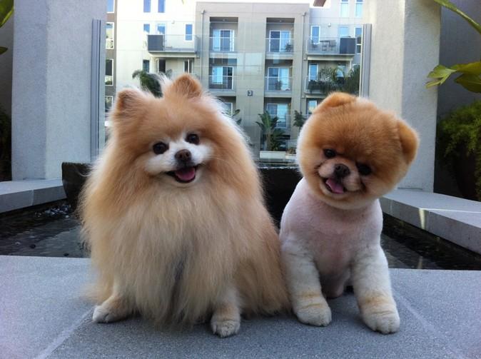 стрижка собак в Обнинске